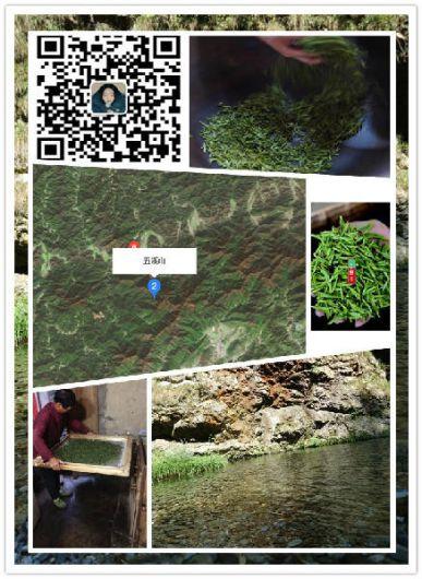 随手分享喝茶爱情的小故事,井冈山大学梧桐树下